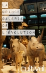 The Gallery of Evolution