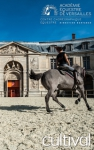 Behind the scenes at the royal stables of the Château de Versailles